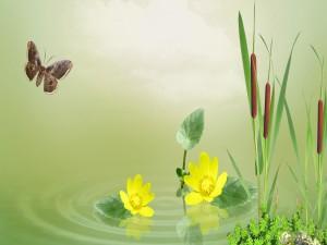 Postal: Mariposa, flores y cañas en un estanque