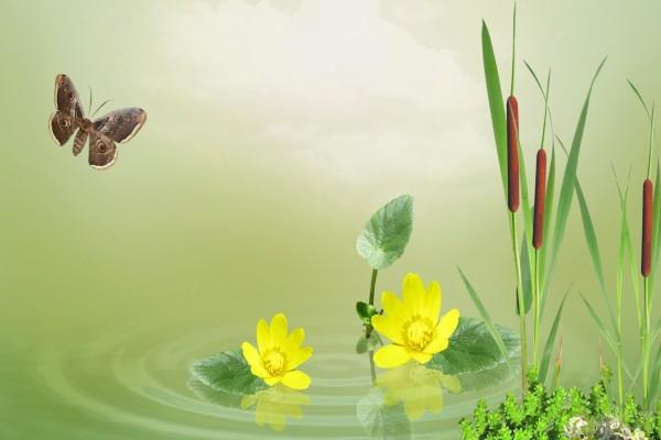 Mariposa, flores y cañas en un estanque