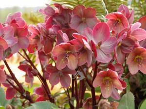 Postal: Conjunto de flores rosas