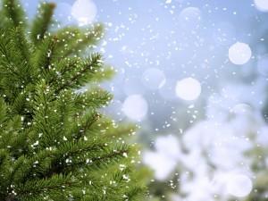 Postal: Copos de nieve cayendo sobre un abeto
