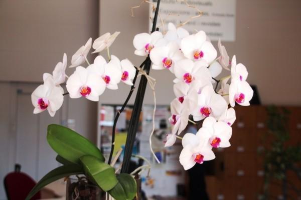 Planta con orquídeas