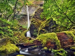 Fina cascada entre rocas con musgo