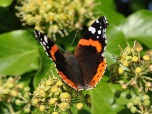 Postal: Una bella mariposa sobre la planta