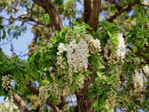Bonitas flores colgando de las ramas del árbol
