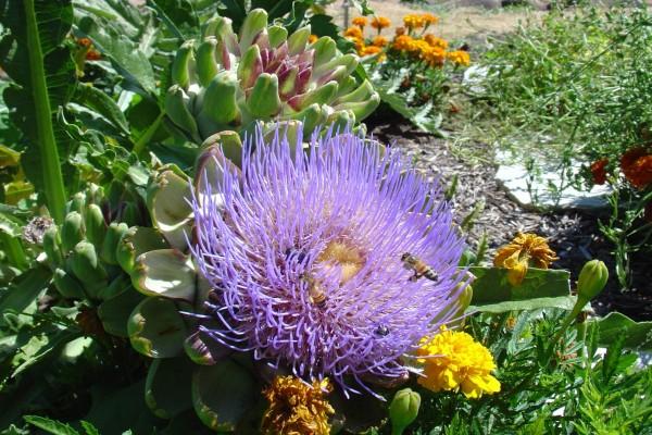 Abejas en una gran flor