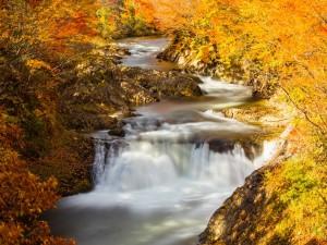 Postal: Río entre árboles con hojas otoñales