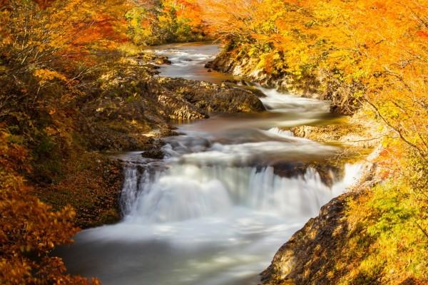 Río entre árboles con hojas otoñales