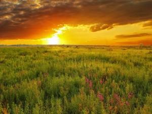 Últimos rayos de sol sobre el campo