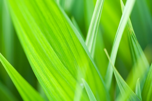 Briznas de hierba verde