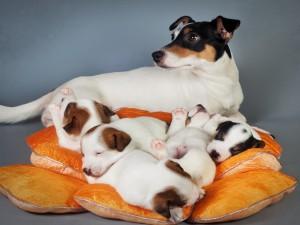 Postal: Perra cuidando con atención a sus cachorros