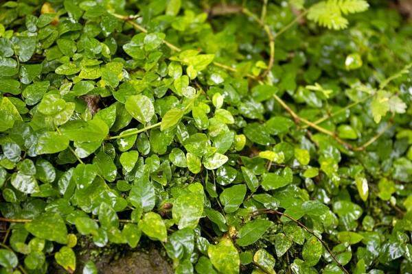 Las hojas verdes de una planta