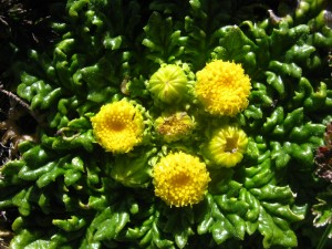Postal: Flores amarillas en una planta
