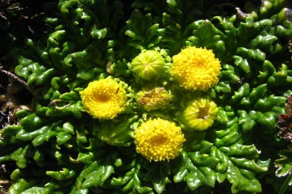 Flores amarillas en una planta