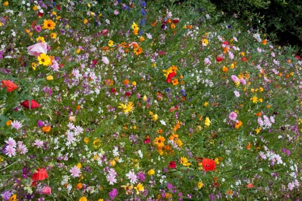 Colorido campo con gran variedad de flores