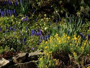 Postal: Plantas con pequeñas flores