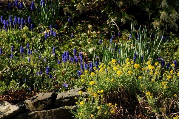 Plantas con pequeñas flores