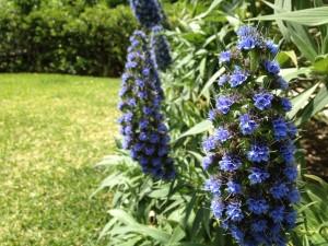 Postal: Pequeñas flores azules en la planta
