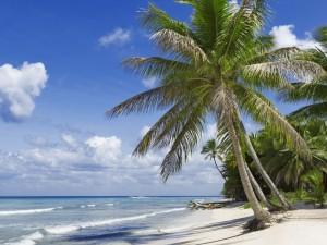 Postal: Palmeras frente al océano