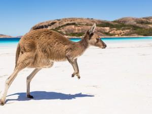 Postal: Canguro en la playa