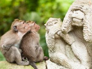 Postal: Monos observando una estatua de monos