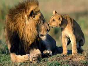 Postal: Cachorro besando al gran león