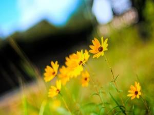 Postal: Florecillas amarillas en el campo