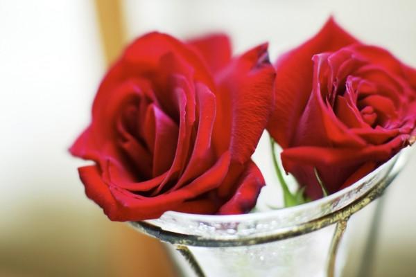 Rosas rojas en una copa