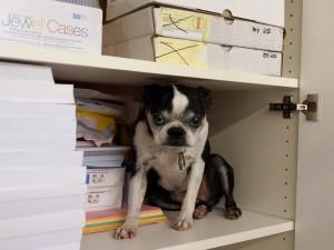 Un perro escondido