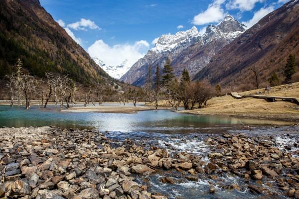 Piedras y árboles en el curso del río