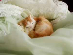 Postal: Gatito durmiendo muy cómodo entre las sábanas