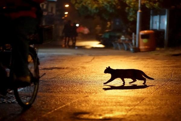 Un gato caminando en la noche