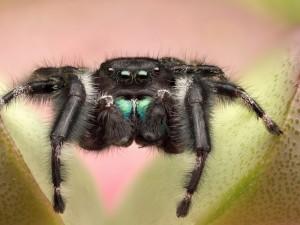Araña con las patas sobre unas hojas