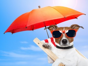 Postal: Un perrito de vacaciones