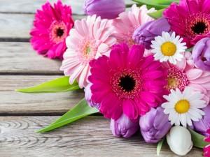 Tulipanes, margaritas y gerberas