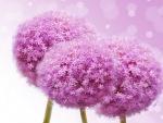 Ramillete de flores color púrpura