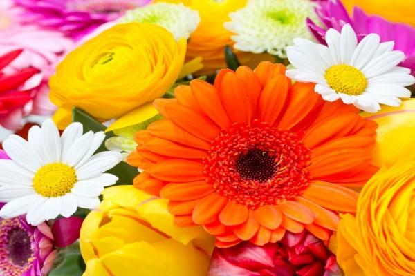 Un bonito ramo con flores de varios colores