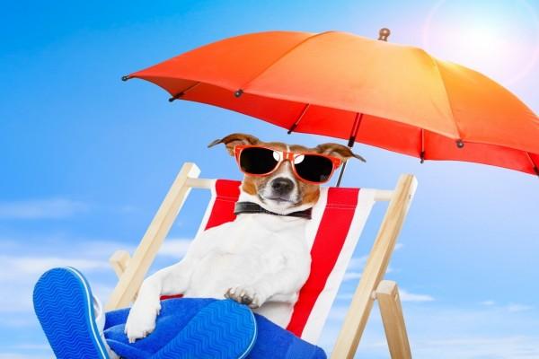 Un perro con gafas de sol en una tumbona
