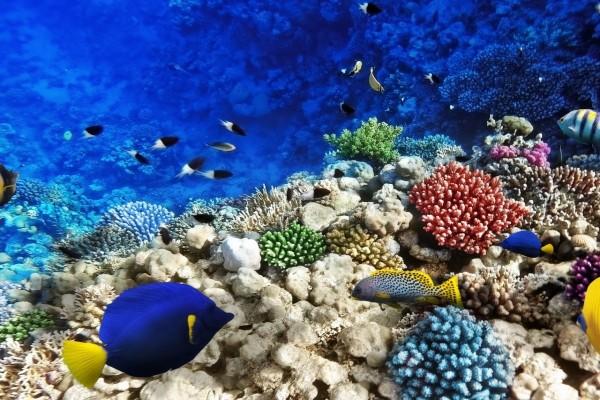 Peces y naturaleza en el fondo marino