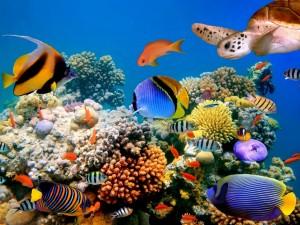 Tortuga y peces de colores en el fondo marino