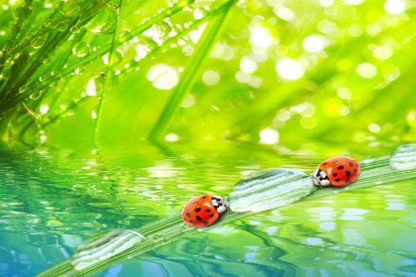 Mariquitas y gotas de agua