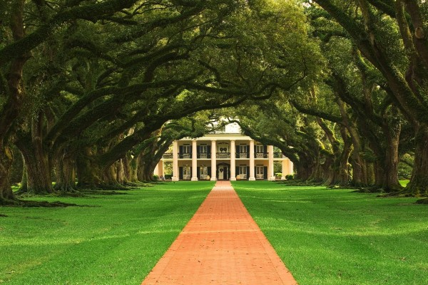 Camino entre árboles hacia la casa