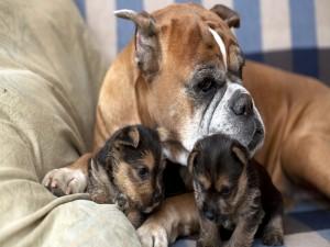 Una perra junto a sus dos cachorros