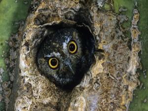 La cara de un búho en el tronco del árbol