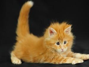 Un gatito estirado en el suelo