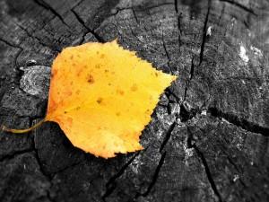 Una hoja amarilla sobre un tronco
