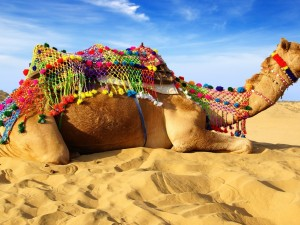 Postal: Camello tumbado en la arena