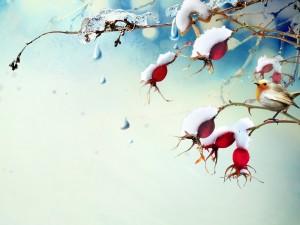 Pájaro en la rama del árbol con bayas y copos de nieve