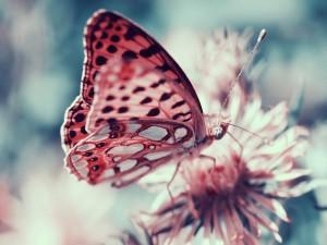 Postal: Mariposa posada en una flor