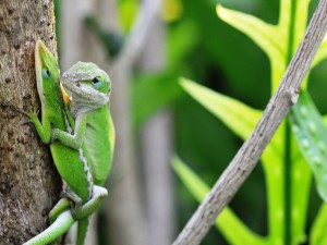 Dos lagartos en el tronco del árbol
