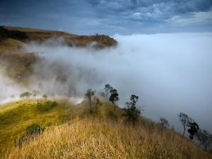 Niebla en la colina